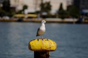 Απεργία ΠΝΟ: Κλιμάκωση των κινητοποιήσεων ετοιμάζουν οι ναυτεργάτες- Επιστροφή άρον – άρον από τα νησιά