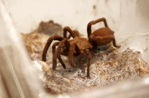 Έκλεψαν 7.000 έντομα αξίας 40.000 δολαρίων από Μουσείο Επιστήμης στη Φιλαδέλφεια των ΗΠΑ