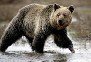 Φτιάχνουν… «οίκο ευγηρίας» για τις υπερήλικες αρκούδες!