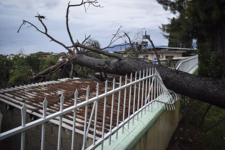 Μεσογειακός κυκλώνας: Αγνοούμενοι στην Εύβοια – Γυναίκα βρέθηκε πάνω σε δέντρο – Νέες εικόνες απόλυτης καταστροφής! | Newsit.gr
