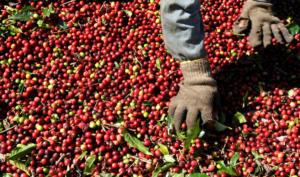 To Ελ Σαλβαδόρ… ποντάρει στον καφέ πρώτης ποιότητας