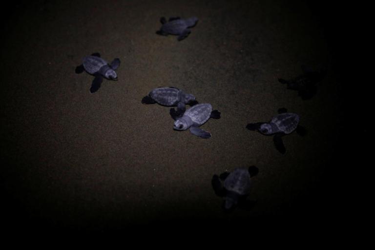 Τρομακτικά στοιχεία για τη θαλάσσια μόλυνση – Πάνω από τις μισές θαλάσσιες χελώνες στους ωκεανούς έχουν φάει πλαστικό! | Newsit.gr