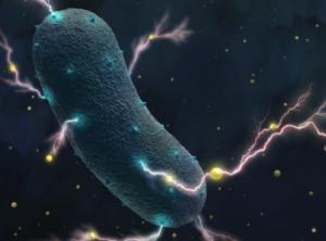 Τα βακτήρια του εντέρου παράγουν και ηλεκτρικό ρεύμα!