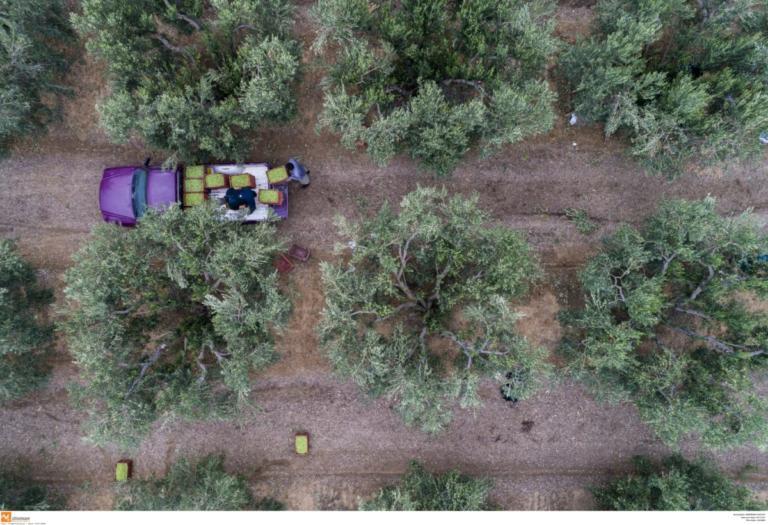 Χανιά: Τραγικός θάνατος αγρότη μέσα στο χωράφι του