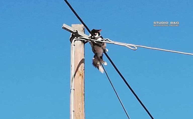 Αργολίδα: Η γάτα που… έφτασε στο Θεό – Κοίταξε κάτω και κοκκάλωσε [pics] | Newsit.gr