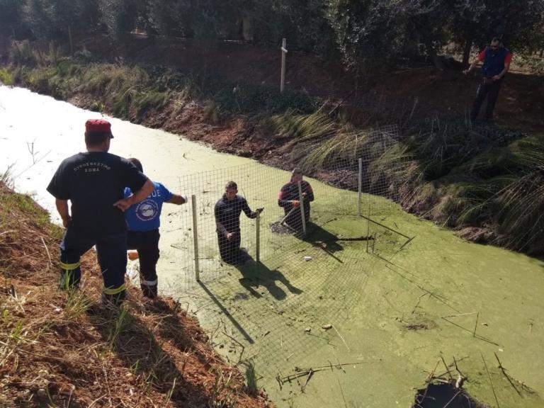 Θρίλερ δίχως τέλος με το κρανίο στην Πρέβεζα! Αδειάζουν την τάφρο στην οποία βρέθηκε – video | Newsit.gr