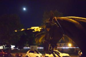 Λάρισα: Άλογο συγκρούστηκε και διέλυσε αυτοκίνητο – Η εικόνα που είδε ο οδηγός μετά το ατύχημα [pic]