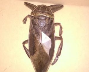 Λαμία: Άνοιξαν το παράθυρο και είδαν αυτό το σαρκοφάγο έντομο μπροστά τους – Άφωνοι όταν έμαθαν περί τίνος επρόκειτο [pics]