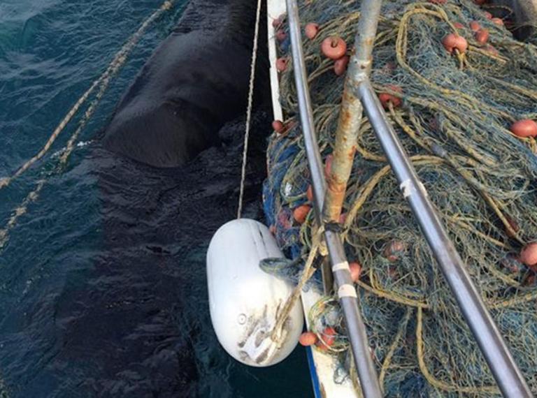 Ηλεία: Η θάλασσα έκρυβε εικόνες που δεν περίμενε κανείς – Το πανέμορφο άλογο που κολυμπούσε 15 μέρες – video | Newsit.gr