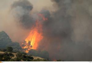 Χαλκιδική: Επτά χιλιάδες στρέμματα η καμμένη έκταση από την πυρκαγιά στη Σάρτη