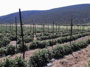 Αυστραλία: Νέα τεχνολογία προειδοποιεί για παράσιτα που απειλούν την παραγωγή