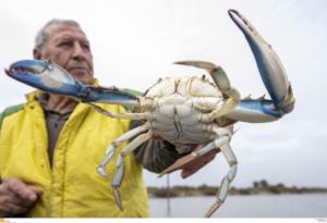 Θεσσαλονίκη: Οι ψαράδες ποζάρουν περήφανοι με τα «τρόπαια» στα χέρια – Οι εικόνες στη λιμνοθάλασσα Καλοχωρίου [pics]