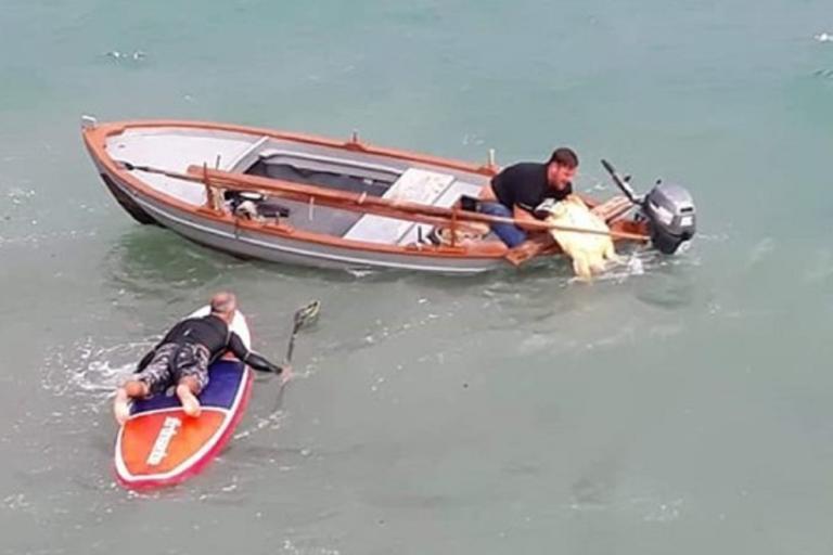 Πάργα: Πάλεψαν με τα κύματα για να σώσουν μια χελώνα καρέτα-καρέτα! | Newsit.gr