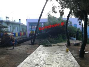 Κόρινθος: Ξεριζώθηκε δέντρο και έπεσε στην αυλή του νηπιαγωγείου – Τα παιδιά είχαν Άγιο [pics]