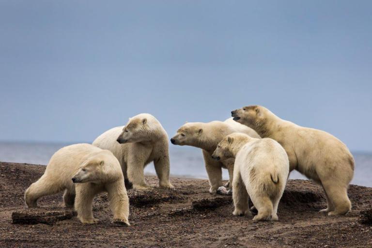 Μεγάλες αρκούδες