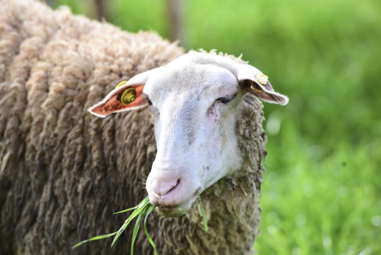 Λέσβος: Στοιχεία που προβληματίζουν τους κτηνοτρόφους – Η σύσκεψη με πρωτοβουλία του ΣΥΡΙΖΑ!   Newsit.gr