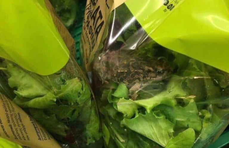 Η αλήθεια για τον βάτραχο που βρέθηκε σε σαλάτα | Newsit.gr