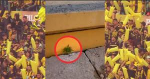 Καλλιεργούν μαριχουάνα στο γήπεδο! Απίθανο video από την κερκίδα