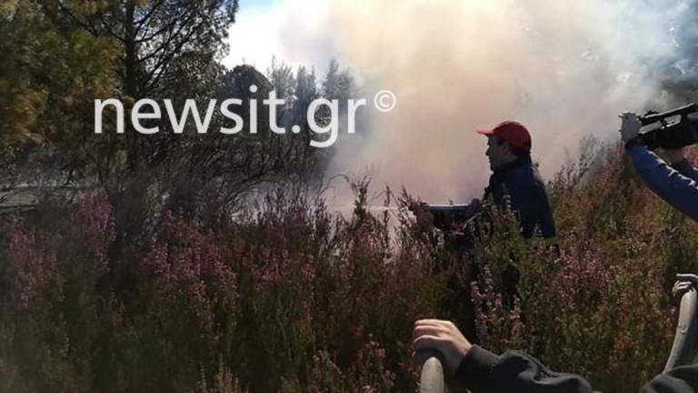 Φωτιά στη Χαλκιδική: Από τη θάλασσα θα φύγουν οι κάτοικοι αν γίνει εκκένωση | Newsit.gr