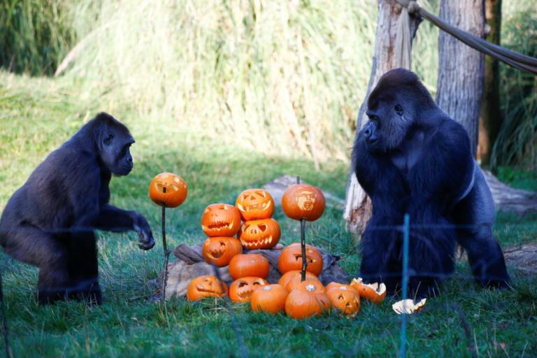 Γιόρτασαν το Halloween στον ζωολογικό κήπο του Λονδίνου! Ξεκαρδιστικές εικόνες [pics] | Newsit.gr