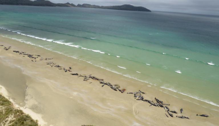 Μυστήριο στη Νέα Ζηλανδία με 150 νεκρά δελφίνια [pic] | Newsit.gr