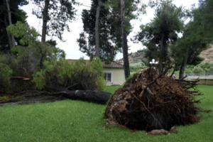 Τρίκαλα: Δέντρο καταπλάκωσε εργάτη στο Νεραϊδοχώρι