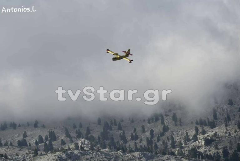 Καίγεται δάσος με έλατα στην Εύβοια – Στάχτη πάνω από 80 στρέμματα [pics] | Newsit.gr