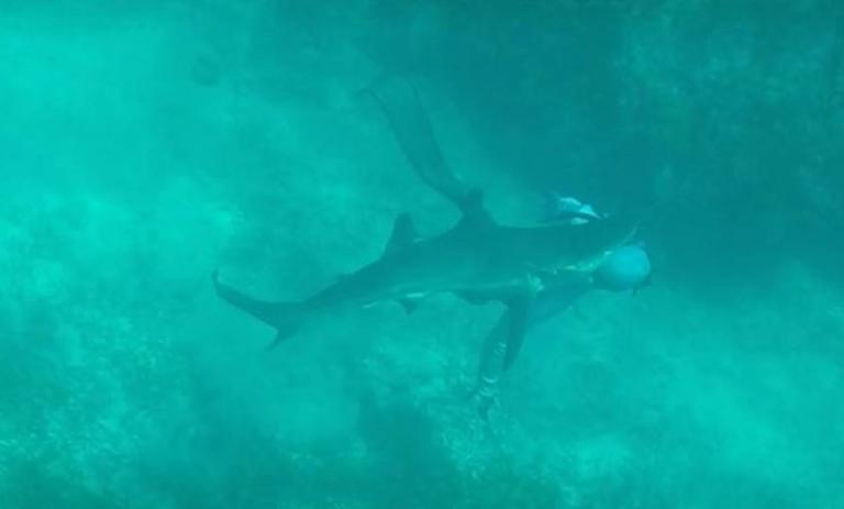 Καρχαρίας δαγκώνει ψαροντουφεκά στο κεφάλι! Video | Newsit.gr