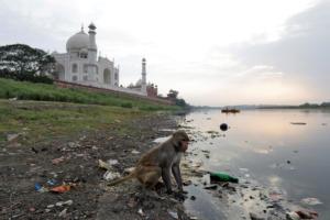 Αδιανόητη τραγωδία! Μαϊμού μπήκε σε σπίτι, άρπαξε βρέφος και το σκότωσε