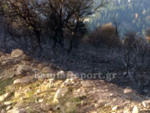 Εύβοια: Υπό έλεγχο η πυρκαγιά στη Σέτα – video