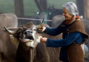 Διχασμένη η Ελβετία: Με κέρατα ή χωρίς;