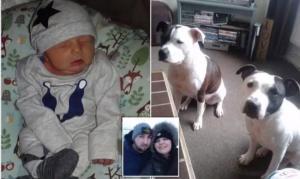 Χαροπαλεύει νεογέννητο αγοράκι μετά από επίθεση του σκύλου της οικογένειας! – Video
