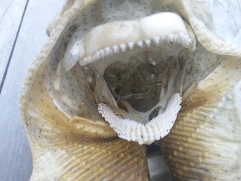Τέρας με κοφτερά δόντια και φτερά ξεβράστηκε σε παραλία [pics]