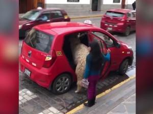 Ταξί: Αυτός είναι ο πιο παράξενος και σπάνιος πελάτης! – Video