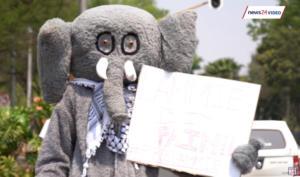 Νότια Αφρική: Διαδηλώσεις για την απελευθέρωση της τελευταίας ελεφαντίνας του ζωολογικού κήπου του Γιοχάνεσμπουργκ