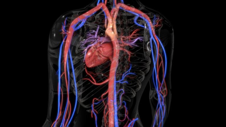 Αγγειίτιδα: Τα «αθώα» συμπτώματα από σοβαρό πρόβλημα στα αγγεία – Ποια είναι η θεραπεία | Newsit.gr