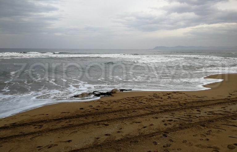 Χανιά: Δεν πίστευαν στα μάτια τους με αυτό που ξέβρασε η θάλασσα! [pics]