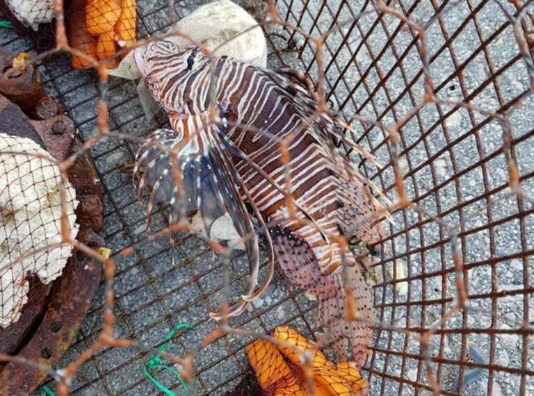 Ρόδος: Έπιασε αυτό το ψάρι και προτίμησε να μην το ακουμπήσει – Τα αγκάθια του έκρυβαν δηλητήριο – video | Newsit.gr