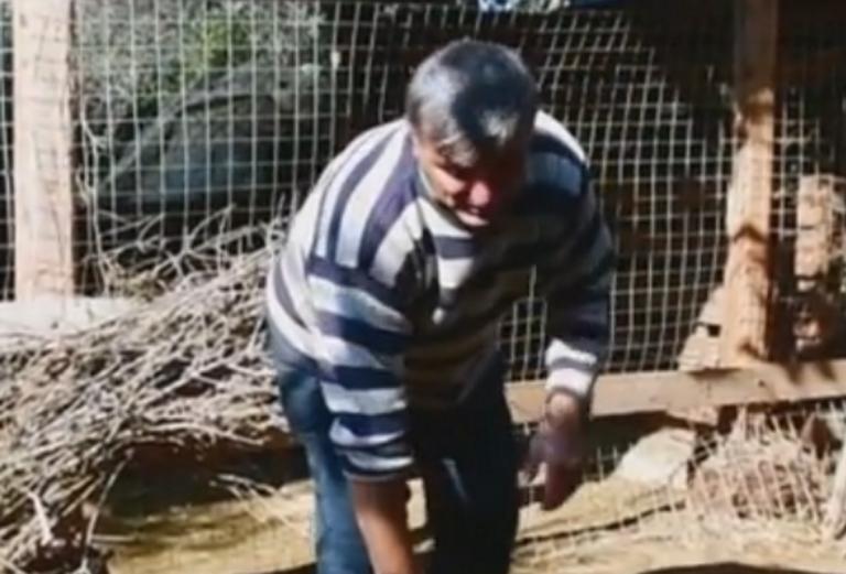 Ναύπλιο: Μπήκαν στη στάνη και κατασπάραξαν τα πρόβατα – Σε απόγνωση οι κτηνοτρόφοι – video