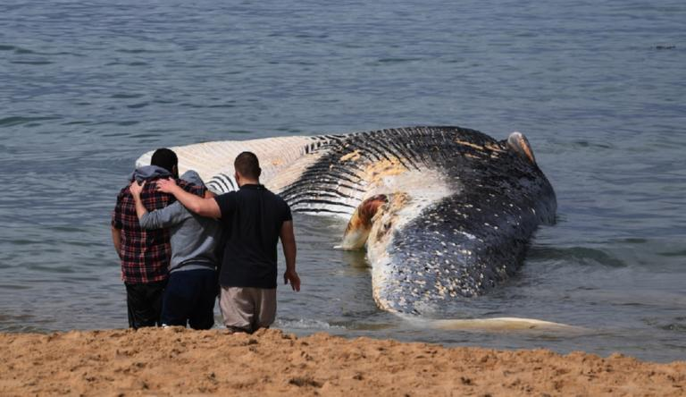 Ινδονησία: Βρέθηκε νεκρή μια φάλαινα με γεμάτο το στομάχι της με έξι κιλά πλαστικά απόβλητα!   Newsit.gr
