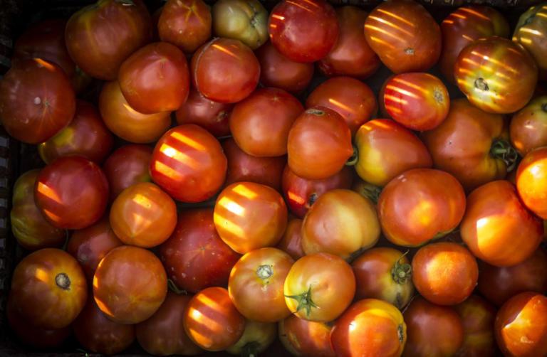 Δεσμεύτηκε 1,5 τόνος ντομάτας σε επιχείρηση στον Πειραιά! | Newsit.gr