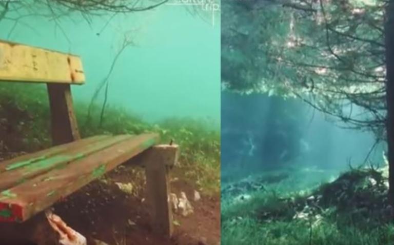 Αυτό το δάσος βρίσκεται κάτω από την επιφάνεια της θάλασσας – Εικόνες που συναρπάζουν | Newsit.gr
