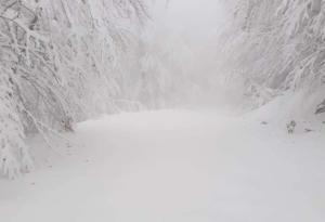 """Καιρός: """"Βούλιαξε"""" στο χιόνι η Πιερία – Εικόνες… ολόλευκες"""