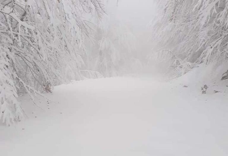 Καιρός: «Βούλιαξε» στο χιόνι η Πιερία – Εικόνες… ολόλευκες