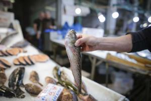 Πρέβεζα: Μοναδικά βιολογικά χαρακτηριστικά στα ψάρια του Αμβρακικού Κόλπου – Τι έδειξαν οι αναλύσεις!