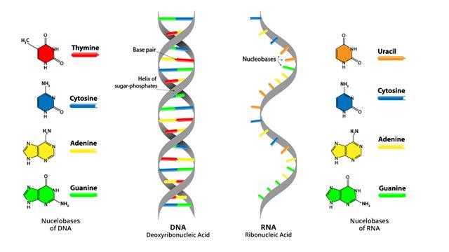 Ανακαλύφθηκε πρωτεΐνη που ανοίγει το δρόμο για… το ελιξήριο της νεότητας! | Newsit.gr