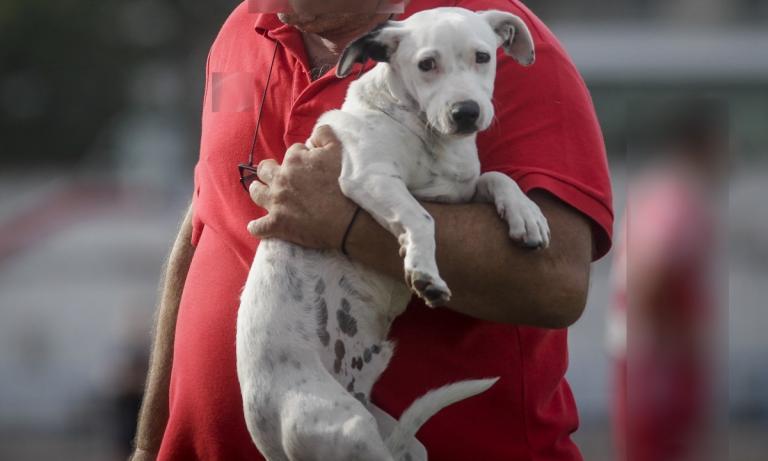 Κρήτη: Με χειροπέδες δύο ιδιοκτήτες σκύλων που δεν είχαν τσιπάκι | Newsit.gr