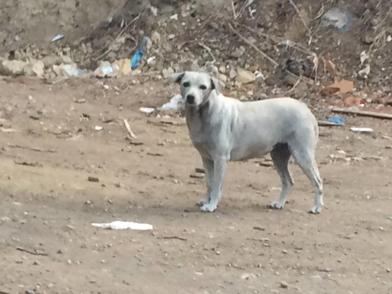 Ηράκλειο: Η σκυλίτσα βρήκε ξανά το χρώμα της – Άφησε τους εθελοντές να την πλησιάσουν [pics] | Newsit.gr