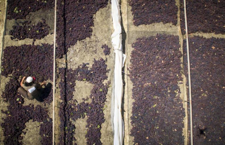 Κορινθία: Η προθεσμία για την παράδοση της ξηρής σταφίδας – Η ανακοίνωση του υπουργείου! | Newsit.gr