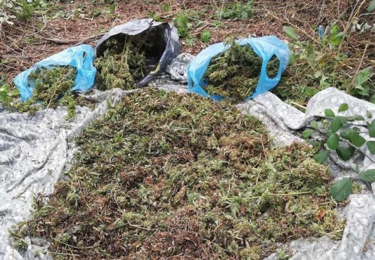 Ημαθία: Έψαξαν προσεκτικά στους θάμνους και ξετρύπωσαν το κρυμμένο μυστικό – Οι εικόνες τον στέλνουν στον εισαγγελέα [pics] | Newsit.gr